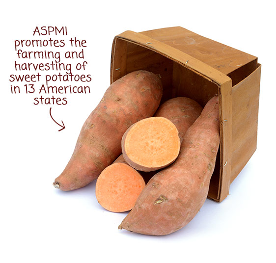 ASPMI promotes the farming and harvesting of sweet potatoes in 13 American states