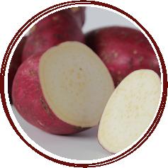 ASPMI_yam-vs-sweetpotato-murasaki